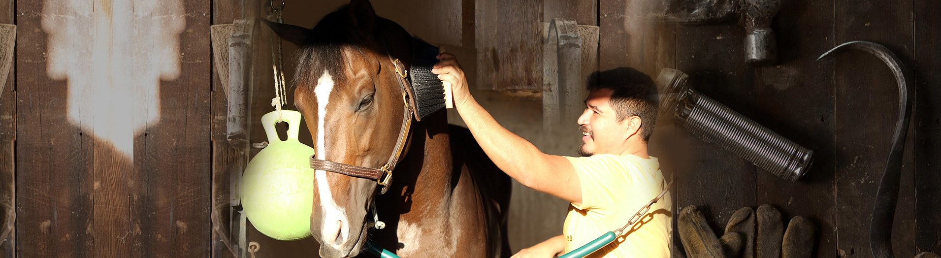 slider-brushing-horse