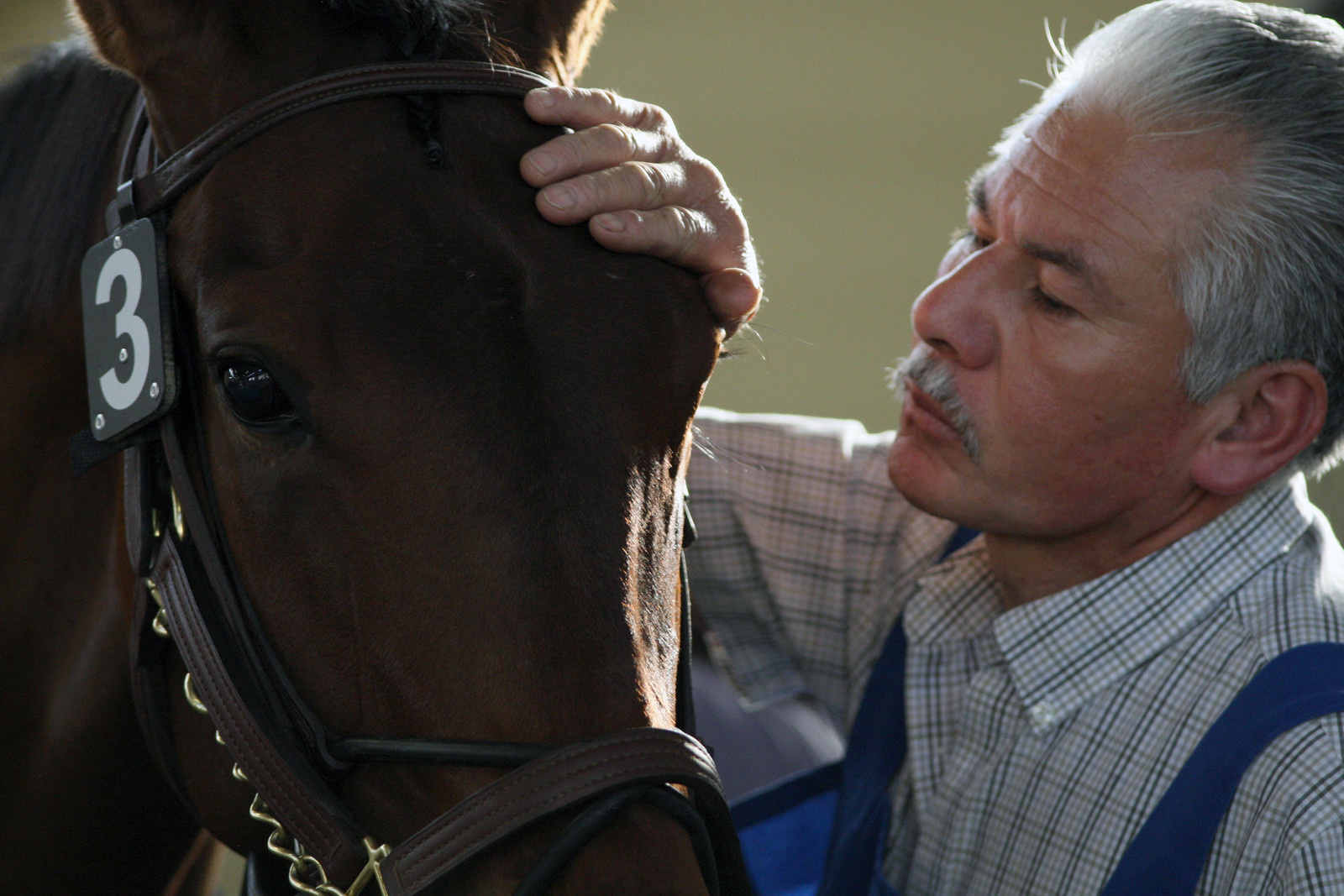 eligibility-req-page-older-man-petting-horse